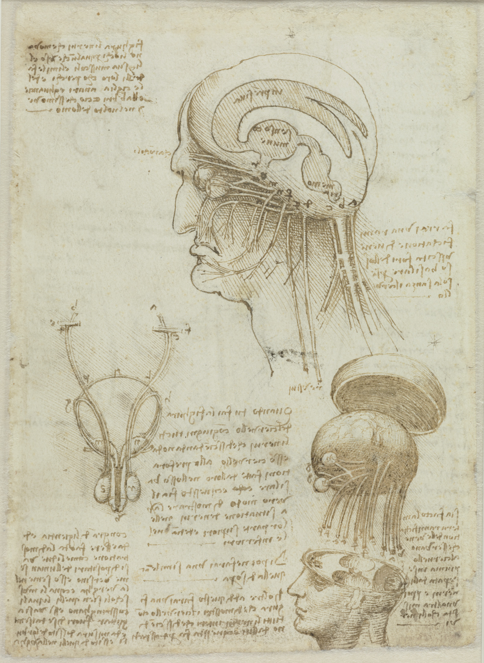 Imagine Da Vinci Could Witness Subcellular Brain Tissue Imaging - Brain Anatomy