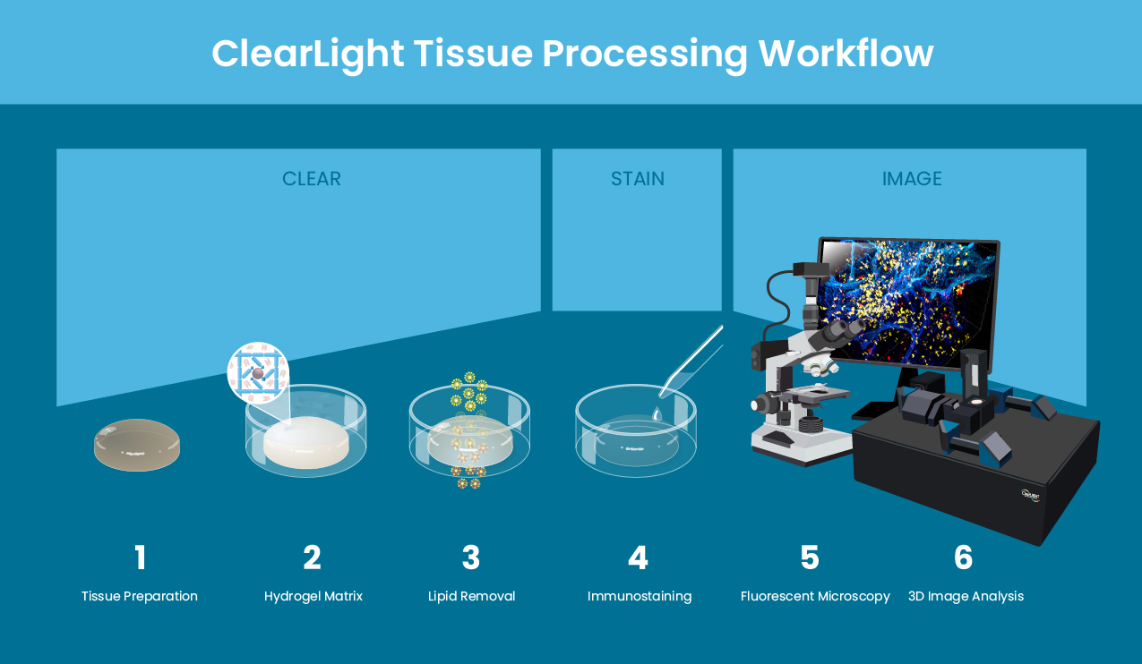 ClearLight Biotechnologies Tissue Processing Workflow - CLARITY Tissue Clearing Kit
